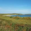 Grasslands on Coastal Headlands in New ...